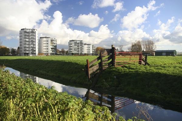 Afbeelding van een weiland met op de achtergrond flatgebouwen