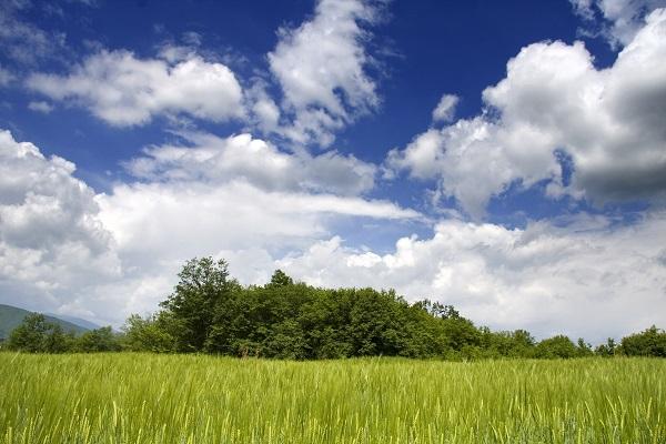 Afbeelding van een stuk gras en struiken